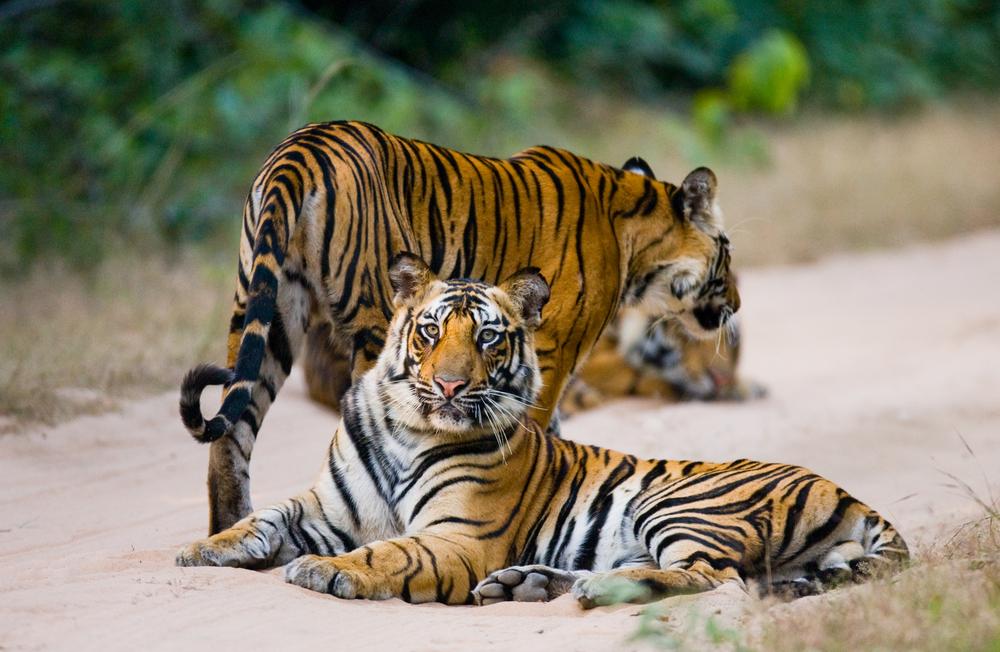India Natural Wonders